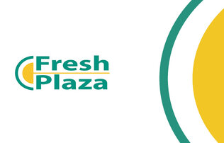 Yellow semicircle outlines by a blue line both situated next to the words Fresh Plaza in the same blue color. At the right the dual semicircles are duplicated to span the height of the image