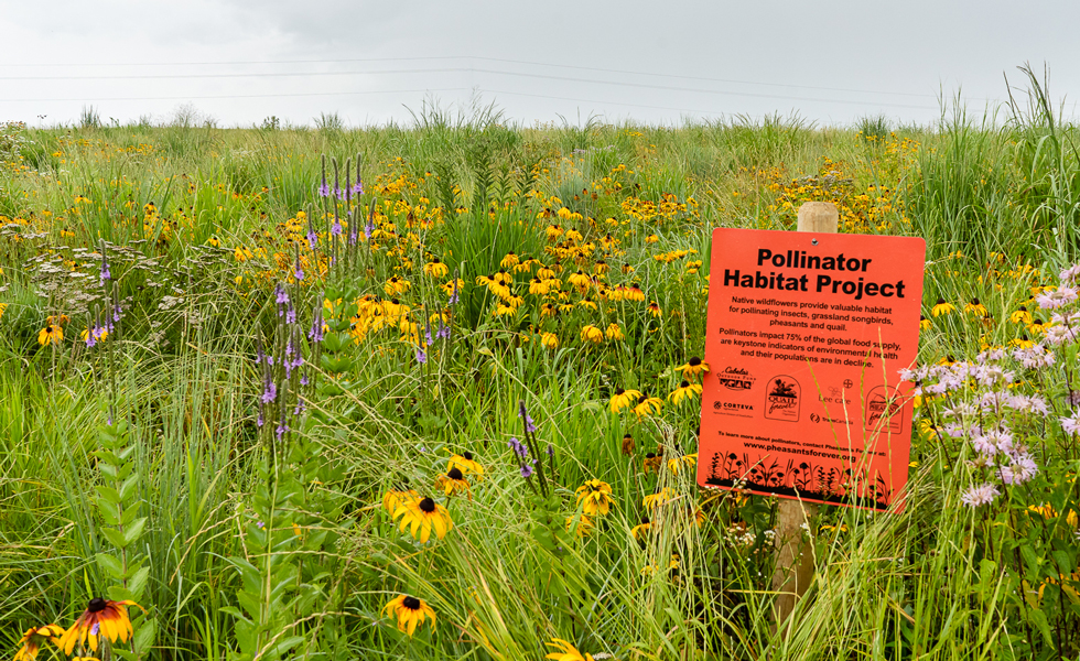 lush field of native pollinator habitat plants with a grey sky overhead. A sign that reads Pollinator Habitat Project sits in the foreground of the image